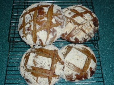 Four loaves of sourdough bread