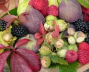 An arrangement of autumn fruits including wild hazelnuts, raspberries, blackberries, figs, pears and decorated with Virginia Creeper